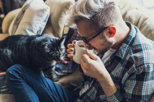 Qualität des Katzenfutters ist wichtig